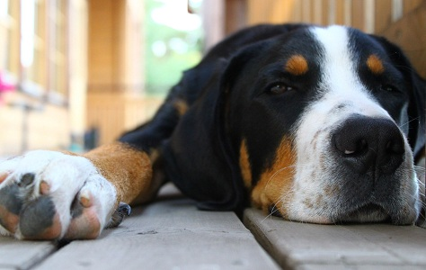 Parasitic Intestinal Worms in Pets