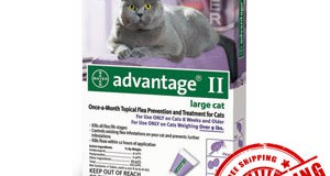 Welcome to the virtual reception desk for Advantage ii For Cat!