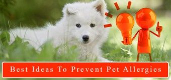 Best Ideas to Manage And Prevent Pet Allergies