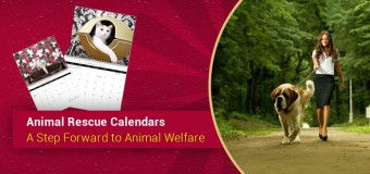 Animal Rescue Calendars- A Step Forward to Animal Welfare