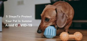 5 Steps To Protect Your Pet In Summer Amid COVID-19