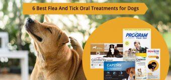 Best Flea & Tick Oral Treatments | Best Flea Pills | Best Oral Flea Prevention for Dogs