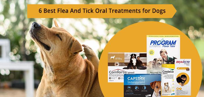 Best Flea & Tick Oral Treatments