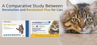 A Comparative Study Between Revolution and Revolution Plus for Cats