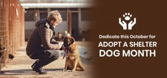 Dedicate this October for Adopt a Shelter Dog Month