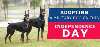 Adopting A Military Dog On This Independence Day