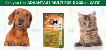 Can you Use Advantage Multi for Dogs on Cats?