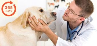 6 Important Questions That Will Help You Better Plan For An Annual Dog Health Check-Up