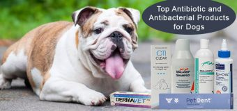 Top Antibiotic and Antibacterial Products for Dogs