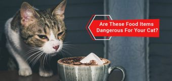 Are These Food Items Dangerous For Your Cat?