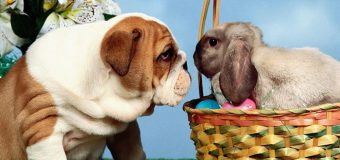 15 Passover Easter Basket Gift Ideas For Your Pet