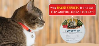 Why Bayer Seresto Is the Best Flea and Tick Collar for Cats