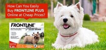 How Can You Easily Buy Frontline Plus Online At Cheap Prices?