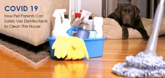 How Pet Parents Can Safely Use Disinfectants to Clean The House during this COVID 19 outbreak