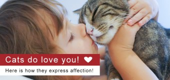 Cats do love you! Here is how they express affection!