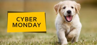 Celebrate The Cyber Monday With Amazing Deals And Offers On Pet Supplies