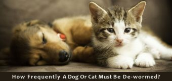 How Frequently A Dog Or Cat Must Be De-wormed?