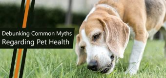 Pet Health Myths You Need to Stop Believing
