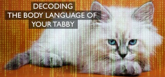 Decoding The Body Language Of Your Cat