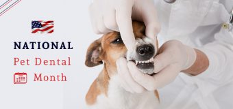 National Pet Dental Month – Importance of Veterinary Care for Dental Health