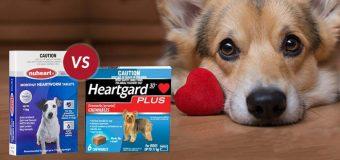 Heartgard Plus vs. Nuheart: A Comparison Between Dog Heartwormers