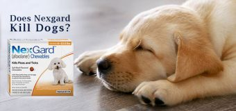 Does Nexgard Kill Dogs?  Things You Ought to Know About Nexgard for Dogs