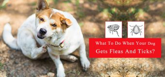 Immediate Steps to Take When You got to know your pet has flea and tick