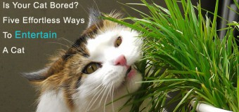 Is Your Cat Bored? Five Effortless Ways To Entertain A Cat