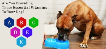 Are You Providing These Essential Vitamins To Your Dog?