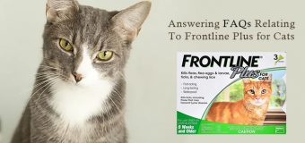 Answering FAQs Relating To Frontline Plus for Cats