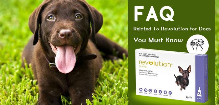 FAQ revolution for dogs