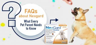 FAQs about Nexgard: What Every Pet Parent Needs to Know