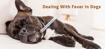 Dealing With Fever in Dogs