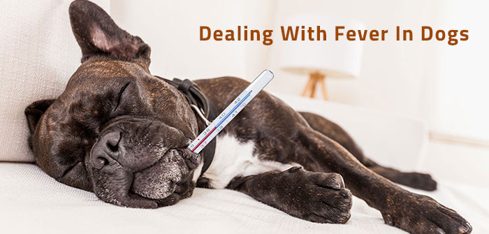 fever in dogs