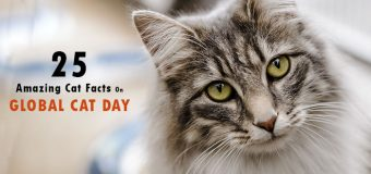 25 Amazing Cat Facts On Global Cat Day