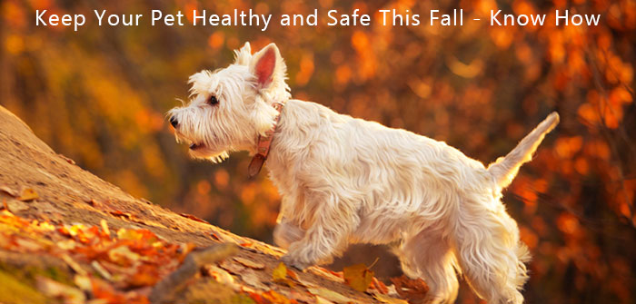 Health Tips to Protect Your Pet during fall