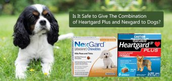 Is It Safe to Give The Combination of Heartgard Plus and Nexgard to Dogs?