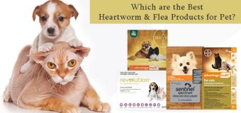 Which are the Best Heartworm & Flea Products for Pet?
