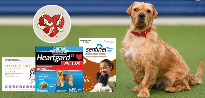 Heartworm Preventions for Dogs