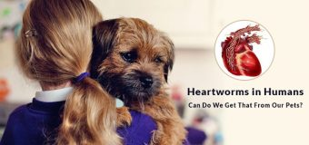 Heartworms in Humans – Can We Get That From Our Pets?