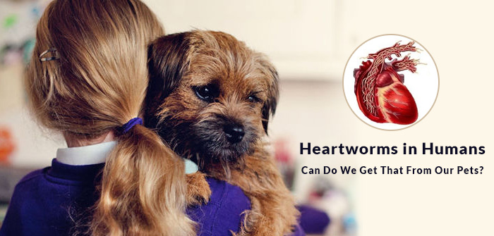 Heartworms in Humans