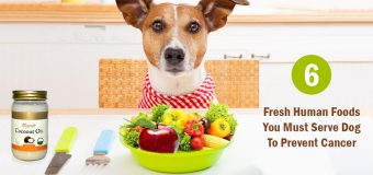 6 Fresh Human Foods You Must Serve Dog To Prevent Cancer