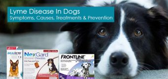 Lyme Disease In Dogs – Symptoms, Causes, Treatments And Prevention