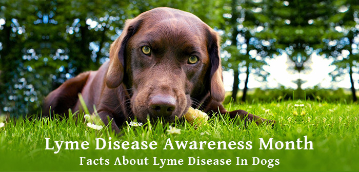 Lyme Disease Awareness Month - Facts About Lyme Disease In Dogs
