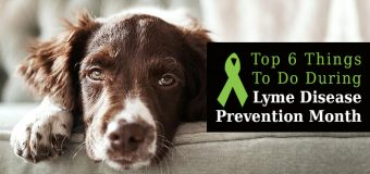 Top 6 Things To Do During Lyme Disease Prevention Month