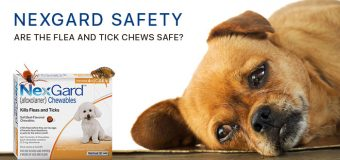 Nexgard Safety: Are The Flea and Tick Chews Safe?