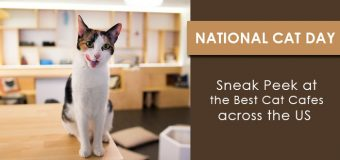 National Cat Day- Sneak Peek at the Best Cat Cafes across the US