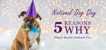 National Dog Day: 5 Reasons Why Elderly Should Celebrate Too