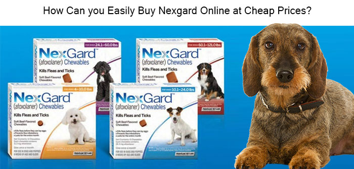 Buy Nexgard online