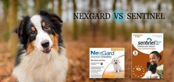 Nexgard vs Sentinel –  Better Flea Treatment for Dogs